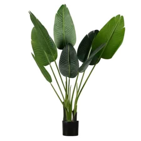 Voor deze prachtige plant van het merk WOOOD heb je geen groene vingers nodig!