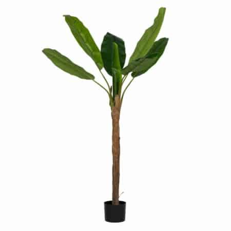 Vaak van huis weg? Geen groene vingers? Of een donker hoekje waar geen plant overleefd? Kunstplanten are here! De bananenplant heeft grote levendige stoffen bladeren en lijkt net echt, waardoor het een mooie keuze is voor elke ruimte.