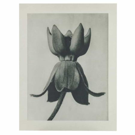 Deze print uit de collectie van het Nederlandse merk BePureHome is gemaakt van honingraatkarton.