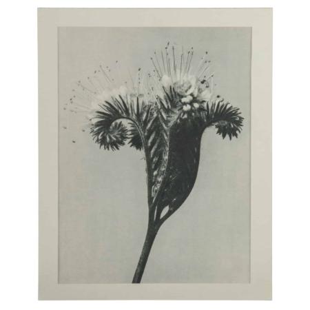 BePureHome Artwork plantstudie 98 grijs beige 50x40